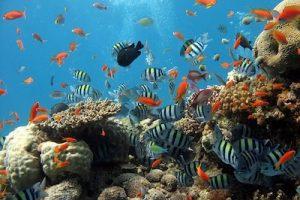 aquarium d'eau douce en cadeau